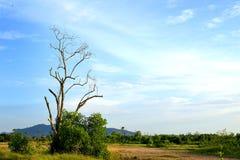 Gruntowi drzewa 2 i niebieskie niebo Zdjęcie Royalty Free