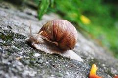 Gruntowy ślimaczek fotografia stock