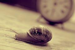 Gruntowy ślimaczek i zegar, w sepiowym brzmieniu Obraz Royalty Free