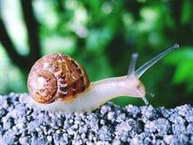 Gruntowy ślimaczek w w górę zielonego tła fotografia royalty free