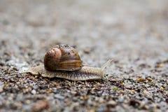 Gruntowy ślimaczek na ziemi Obraz Stock