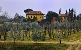 gruntowy winograd Obraz Royalty Free