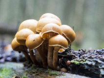 Grup操作蘑菇 图库摄影