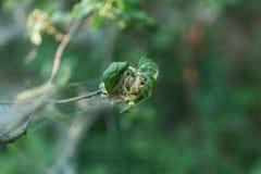Grupa ćma gąsienicowa zaraza na drzewie zdjęcia royalty free