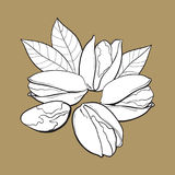 Grupa łuskająca i unshelled pistacjowe dokrętki, nakreślenie wektoru ilustracja royalty ilustracja