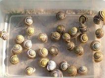 Grupa ślimaczki w pudełku Zdjęcia Royalty Free