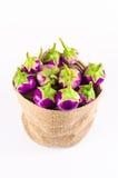 Grupa świeża purpurowa oberżyna w workowej torbie na białym bac Fotografia Stock