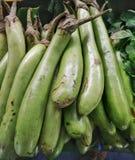 Grupa świeże zielone oberżyny Fotografia Royalty Free