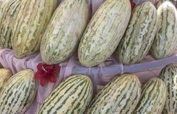 Grupa świezi dojrzali żółci słodcy melony Kantalupów melony dla sprzedaży w organicznie gospodarstwie rolnym obraz stock