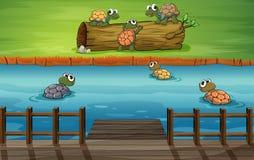 Grupa żółwie przy rzeką ilustracja wektor
