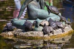 Grupa żółwie w słońcu Obraz Royalty Free