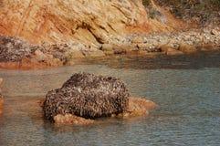 Grupa algi Zdjęcie Stock