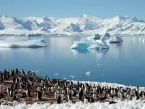 grupa antarctic pingwin Zdjęcie Royalty Free