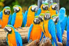 Grupa ar papugi Zdjęcie Royalty Free