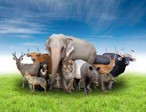 Grupa Asia zwierzęta fotografia royalty free