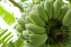 Grupa banany zdjęcia royalty free