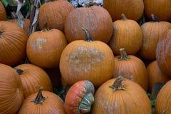 Grupa banie różni kolory Halloween personel zdjęcie stock
