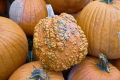 Grupa banie różni kolory Halloween personel zdjęcia royalty free