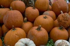 Grupa banie różni kolory Halloween personel obraz stock