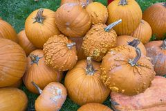 Grupa banie różni kolory Halloween personel obrazy royalty free