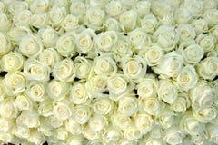 Grupa białe róże, ślubne dekoracje Zdjęcie Royalty Free