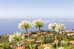 Grupa biały agapanthus blisko wioski i morza obrazy stock