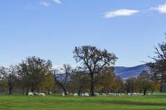 Grupa białych koni jesieni słoneczny dzień Zdjęcie Stock
