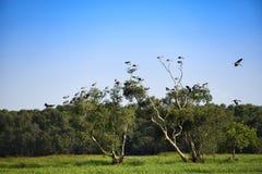 Grupa biały ptak na zielonym drzewie w naturalnym Obrazy Royalty Free