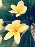 Grupa bielu i koloru żółtego kwiaty Obrazy Stock
