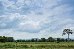 Grupa bizony na zielenieje pole Zdjęcia Royalty Free