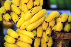Grupa Canarian wyspa banany Obraz Royalty Free