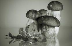 Grupa cep porcini borowik z artystycznym dotykiem w czarny i biały sepiowego tła tła kulinarnym pojęciu Obraz Royalty Free