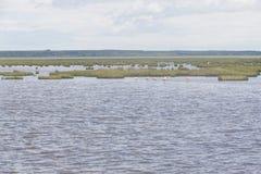 Grupa Chilijscy flamingi obrazy stock