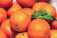 Grupa cytrusów tangerines z zielonym liściem Fotografia Royalty Free