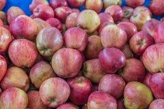 Grupa czerwoni jabłka Zdjęcia Royalty Free