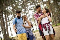 Grupa cztery przyjaciela wycieczkuje wp?lnie przez lasu zdjęcia royalty free