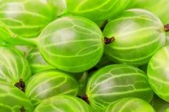 Grupa dojrzała zielona agrestowa jagoda Fotografia Stock