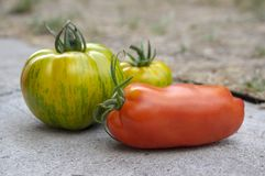Grupa dojrzewający pomidory w dwa pudełek, czerwieni i zieleni owoc po żniwa, przygotowywa jeść zdjęcia stock