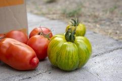 Grupa dojrzewający pomidory w dwa pudełkach, czerwieni i zieleni owoc po żniwa, gotowym jeść, pieprzyć i zielenieć, zebra pomidor obraz stock
