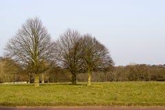 Grupa drzewa Fotografia Royalty Free