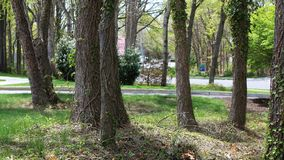 Grupa drzewa na pokojowym krajobrazie obraz stock