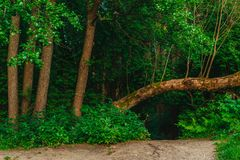 Grupa drzewa przy wejściem las Obraz Stock