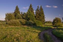 Grupa drzewa w traw polach Obrazy Stock