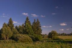 Grupa drzewa w traw polach Fotografia Royalty Free