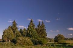 Grupa drzewa w traw polach Obraz Stock