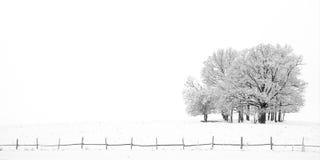 Grupa drzewa w zimie Fotografia Royalty Free
