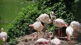 Grupa flamingi odpoczywa na brzeg zbiory