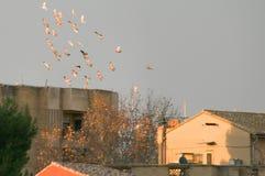 Grupa gołąbek latać Fotografia Royalty Free