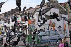 Grupa gołębie w mieście zdjęcie stock