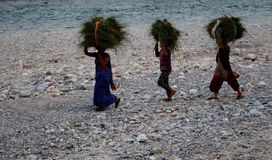 Grupa indyjskie kobiety tradycjonalnie niesie snopy trawa na ich głowach na brzeg rzeki w Jim Corbett parku narodowym, India dale Obraz Stock